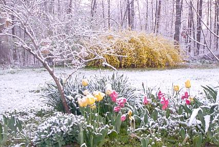 Eastersnow2