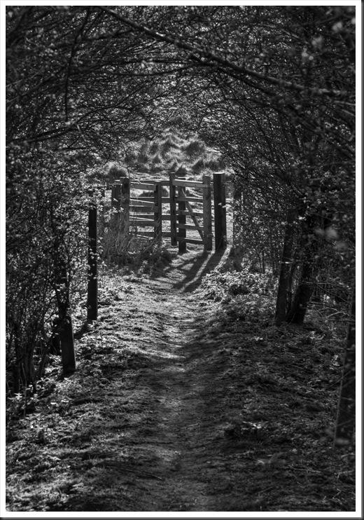 Pathway into light 3_thumb[3]