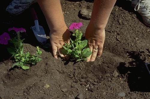 Planting_seeds_6l