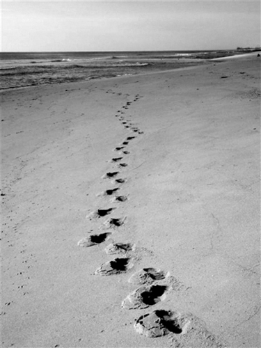 Sandy-Footprints