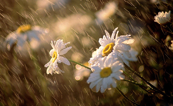 Flowers-in-the-Spring-Rain
