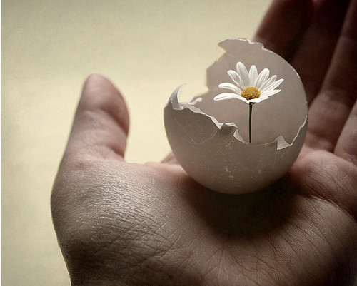 Egg,flower,bloom,delicate,creative,art,photography-4760fa44b155f207092ac66d83899bc3_h