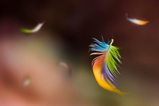 Rainbowfeather