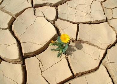 Flower_in_desert12-390x280