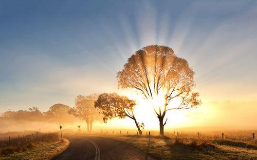 8871510-sunrise-morning-mist