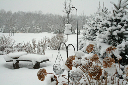 Winter-bird-garden-snow