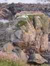 Flowersonrock