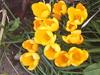Spring_is_sprung_002