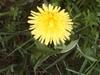 Spring_walk_031_1
